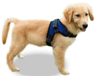 3. Copatchy Reflective Adjustable No-Pull Dog Harness Handle