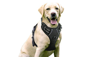 Photo of Top 10 Best Dog Harnesses in 2020 Reviews